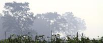 怒江风光之美丽晨雾