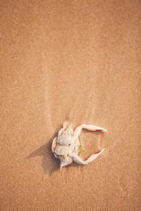 沙滩上死掉的螃蟹