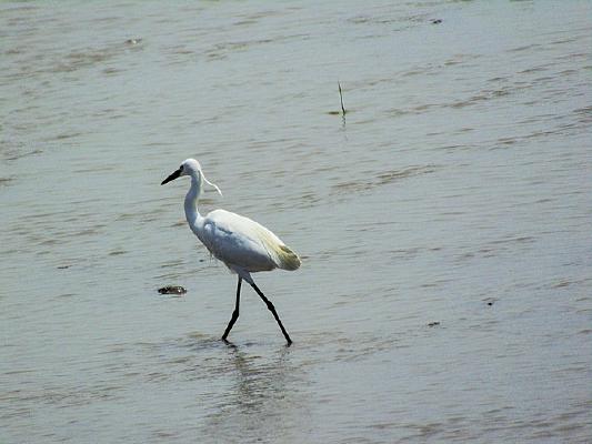 海边的鸟类