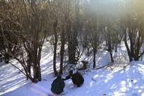 玉龙雪山风光之堆雪人