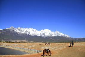 玉龙雪山风光之牧马场