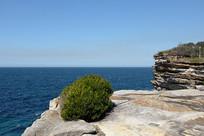 悉尼岩石海滩