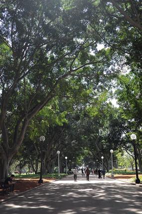 悉尼海德公园