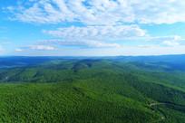 大兴安岭原始森林