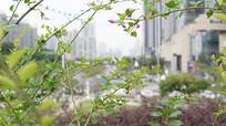绿植下的城市