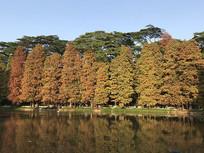 秋天园林美景