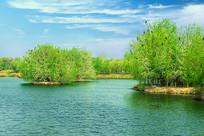 湖边的小树林