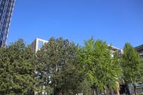 蓝天下的高楼和树木