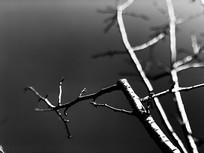 寒冬的枯树枝