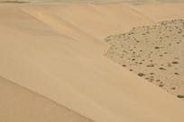 沙漠低谷绿植
