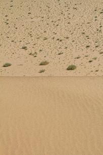 沙漠中斑点绿植