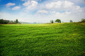 高尔夫球场的草坪