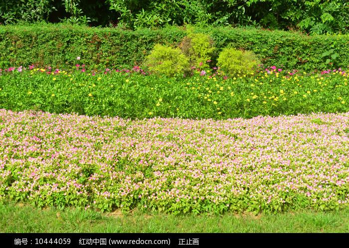 城市公共绿地园林路沿花境图片