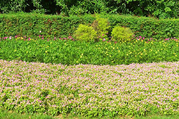 城市公共绿地园林路沿花境