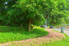 城市公共绿地园林路沿花境设计