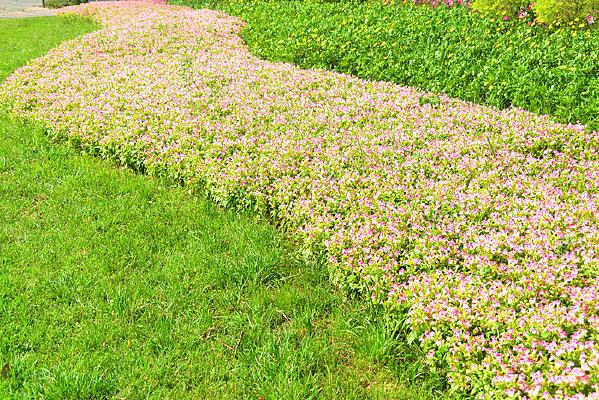 城市公共绿地园林设计路沿花境
