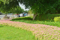 城市公共绿地园林设计之花境