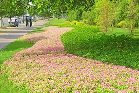 城市绿地路沿花境