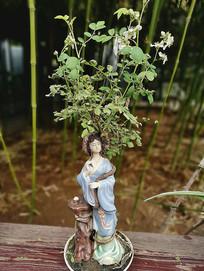 侍女和绿植