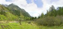 青藏高原河谷的丛林和植被