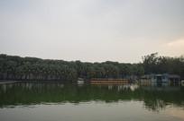 湖泊绿化景观