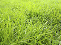 绿草地绿意