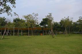 绿色大草坪