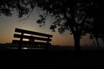 日出时河边树下的长条椅