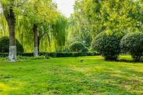 济南大明湖公园绿化