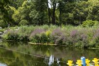 济南植物园风景