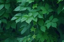 夏日里的绿色