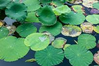 带水珠的叶子