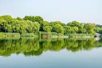 大明湖美丽风光