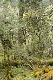 高原原始森的灌木丛林