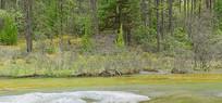 高原原始森林边的清澈小河