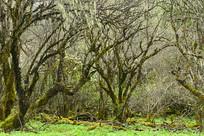高原原始森林里的灌木丛林