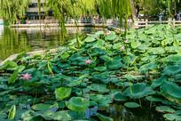 济南大明湖公园摄影