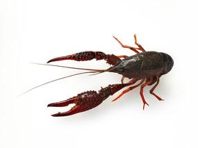 水产小龙虾