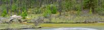 四川毕棚沟的清澈小河