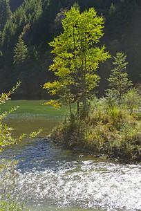 波光粼粼的清澈溪流