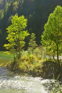 大山深处河谷的清澈溪流