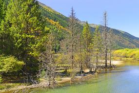 青藏高原河谷的清澈溪流