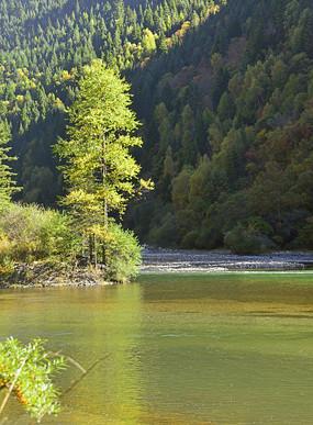 清澈溪流和一棵树