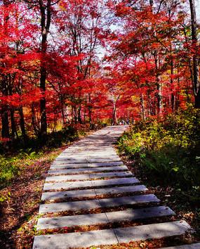 红叶谷石头道路