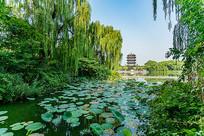 济南大明湖风光美景