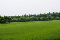 绿色田园景