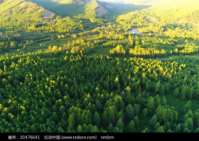 大兴安岭绿色林海图片