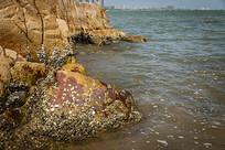 汕头妈屿岛海滨浴场岩石特写