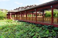 荷塘与民族建筑