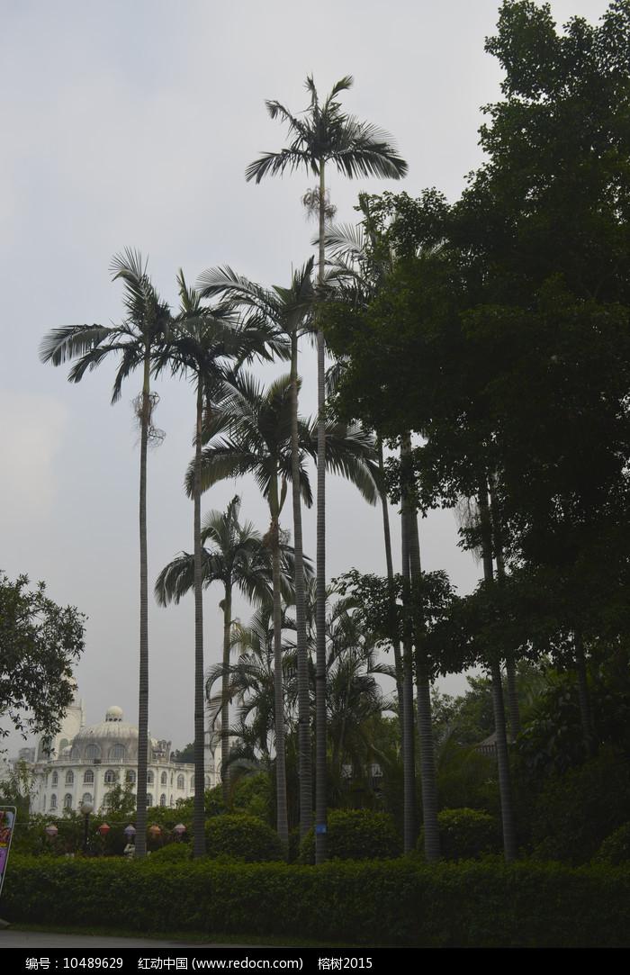 流花湖公园树木图片